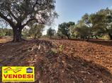 Terreno agricolo in Vendita